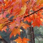 逆光に映える紅葉