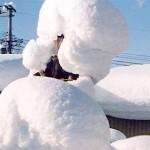 冬の一コマ